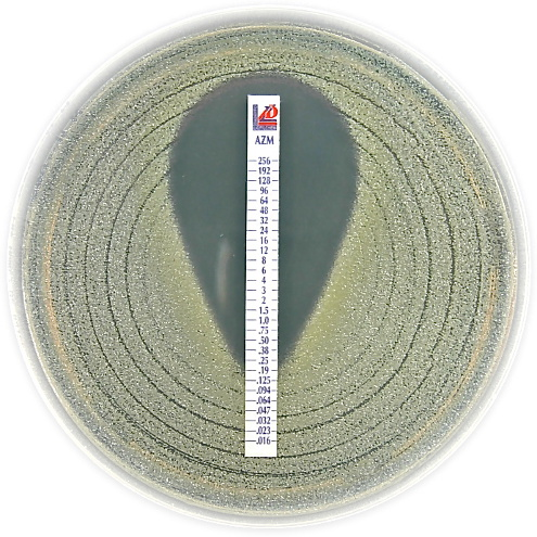 bio agent code assay strip