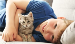 junge_katze_couch_01